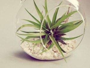 Floating planter